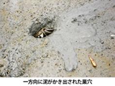 ana_yamato.jpg