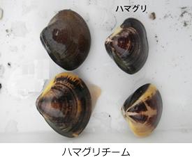 kenkyu02-06.jpg